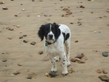 dog training Bournemouth